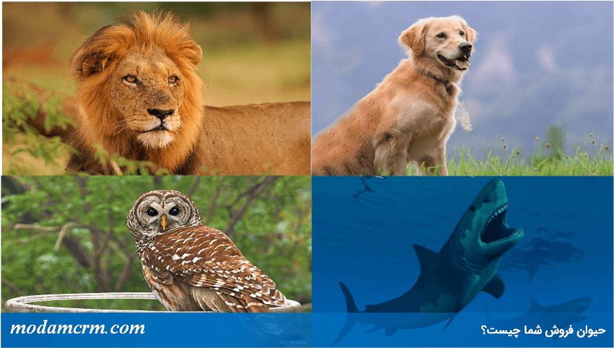 حیوان فروش شما چیست؟
